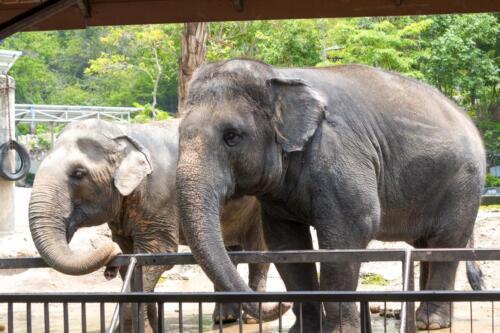 Слон, elefant. бесплатное, красивое, фото, DSLR, camera, photo, free download