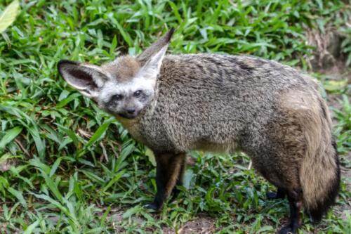 лисица, fox, бесплатное, красивое, фото, DSLR, camera, photo, free download
