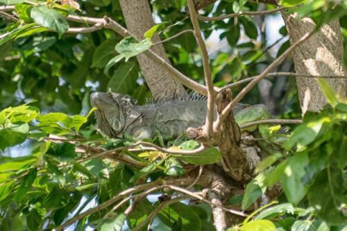 lizard, ящерица, бесплатное, красивое, фото, DSLR, camera, photo, free download