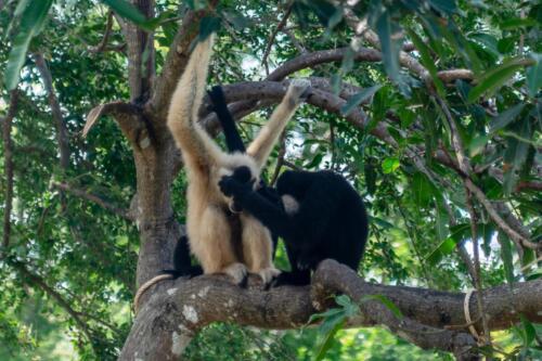 nature, monkey, обезьяна, рука лицо, бесплатное, красивое, фото, DSLR, camera, photo, free download