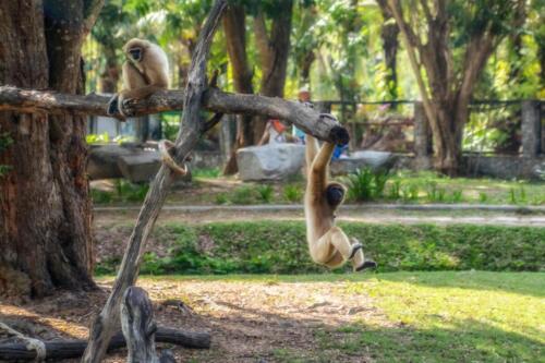 nature, monkey, обезьяны, бесплатное, красивое, фото, DSLR, camera, photo, free download