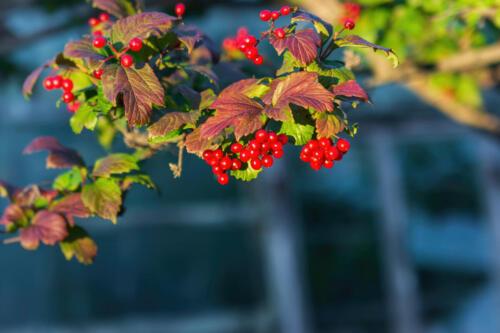 Осень урожай ягод