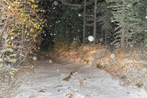 Таежная дорога осенью, падает снег, свет фар машины