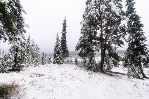 Тайга в снегу осенью