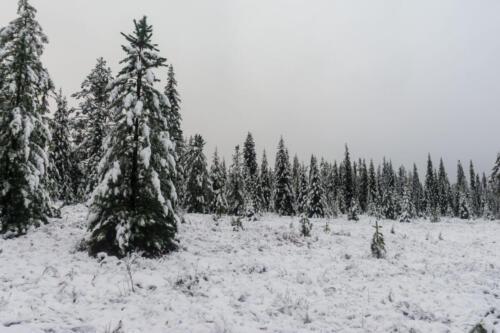 Ранняя осень в тайге выпал снег