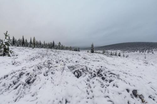 Поляна в тайге осенью под снегом