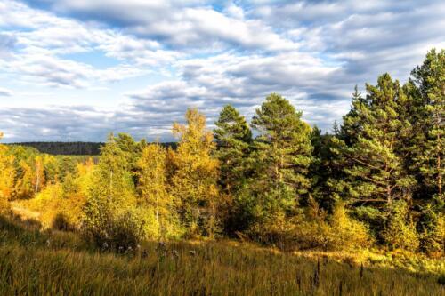 золотая осень в тайге