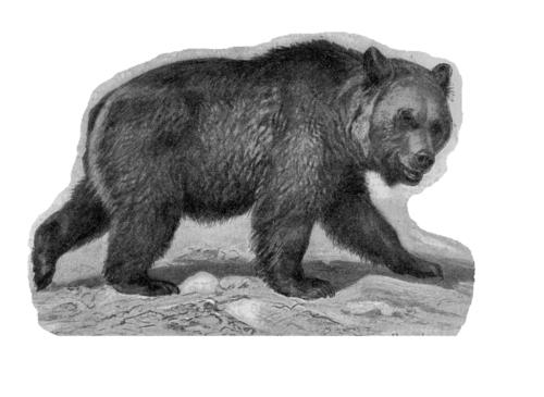 пещерный медведь вымершее животное рисунок