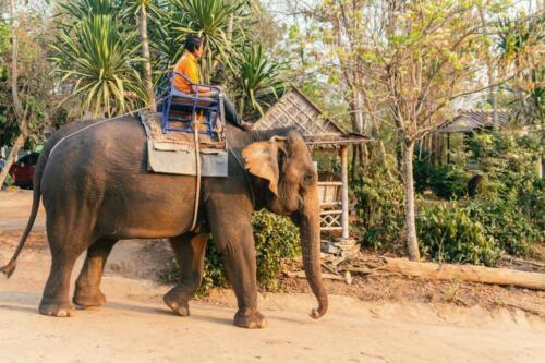 Погонщик на слонихе, Таиланд