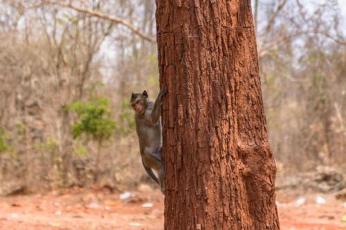 Обезьянка забирается на дерево