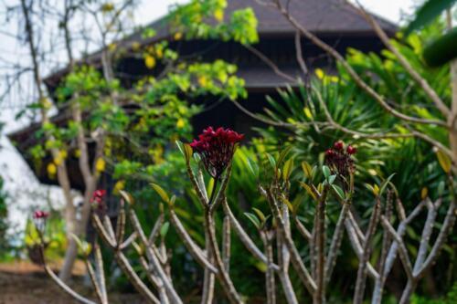 Растения Таиланда