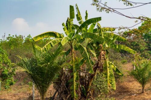 Пальмы, Таиланд провинция Чонбури