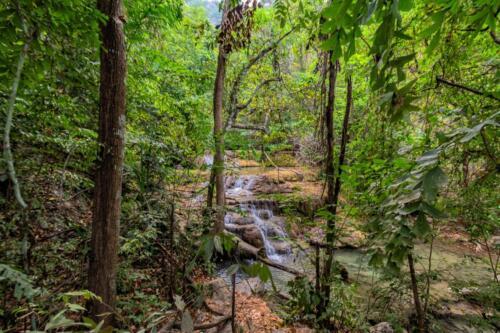 Ручей в горных джунглях