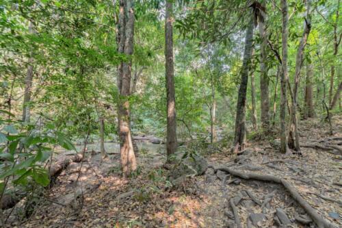 Джунгли в горах