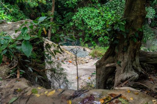 Разноцветный листья в джунглях