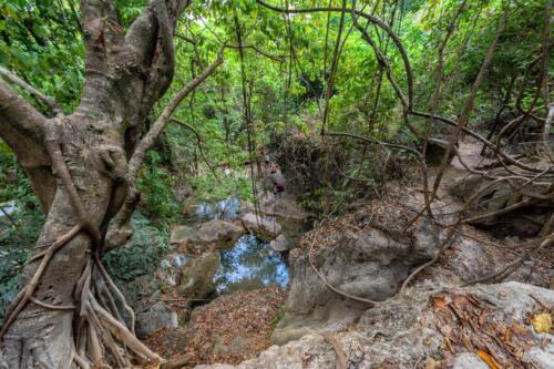 Опавшие листья возле заводи ручья в джунглях