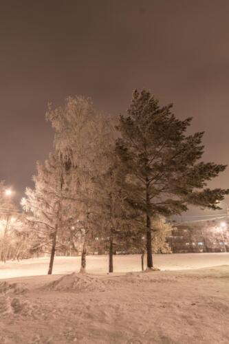 Деревья в морозном наряде