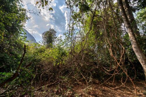 Джунгли, просвет неба сквозь деревья, листья и лианы
