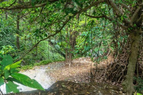 Джунгли: лужа после дождя, лианы, деревья