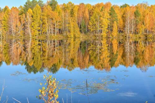 Лес отражается в воде