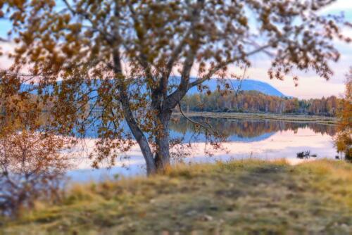 Дерево на берегу озера