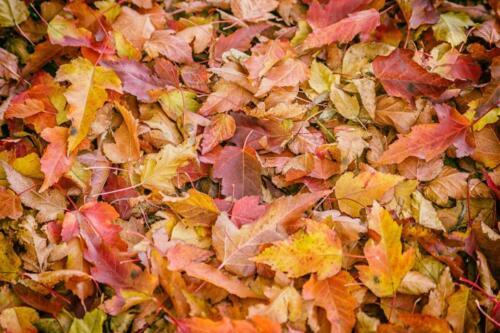листва на земле