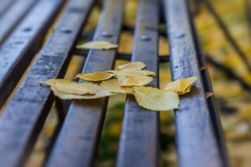 Осенние листья на лавке