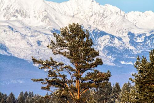 Дерево на фоне гор